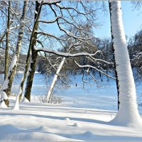 Мороз и солнце ,день чудесный! :: Татьяна