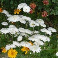 Цветы. :: Надежда Акушко