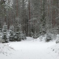 зимний лес.. :: Михаил Жуковский