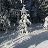 Зима еще царит,но весна уже не за горами.... :: Алена