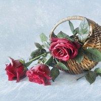 Розы на снегу! :: Алла Шевченко