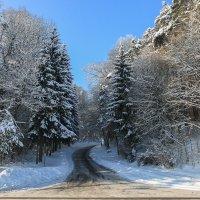 Дорога в лес :: Waldemar .
