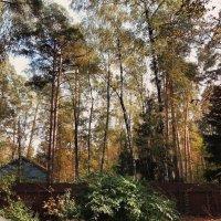 осень :: Volga Ivolga