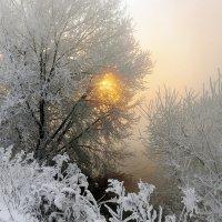 Морозное зимнее утро. :: Анатолий 71