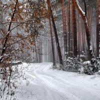 Января последняя метель... :: Лесо-Вед (Баранов)