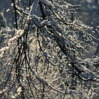 Снежные ткани... :: юрий