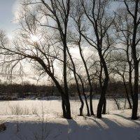 Деревья вдоль реки :: Андрей Зайцев