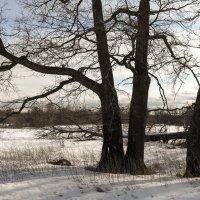 Деревья :: Андрей Зайцев
