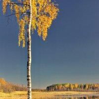 На Даниковском озере :: Валерий Талашов