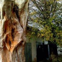 странное дерево :: Александр Прокудин