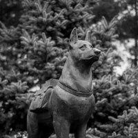 Памятник собакам-подрывникам, истребителям танков :: Иван Синицарь
