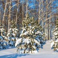 В зимнем наряде :: Любовь Потеряхина