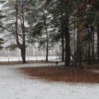 снегопад :: Игорь
