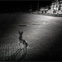 Ночной бродяга. :: Laborant Григоров