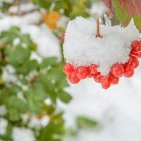 первый снег :: Иван Моняков