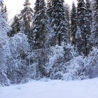Зимний лес :: Александр Щеклеин