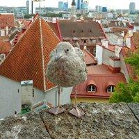Я живу в Таллине :: Елена Гуляева (mashagulena)