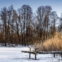 На замерзшем пруду :: Инна Голубицкая