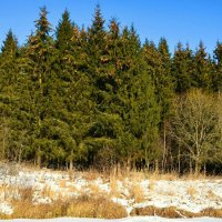 Фото зимней природы :: Милешкин Владимир Алексеевич