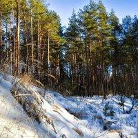 Уголок зимней природы :: Милешкин Владимир Алексеевич