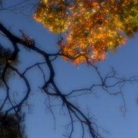 Моноклевая осень.......... :: Валерия  Полещикова
