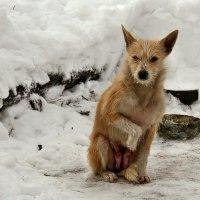 Экскурсия в Гадюкино зимой (28) :: Александр Резуненко