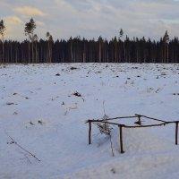 Подмосковный лес :: Андрей Куприянов