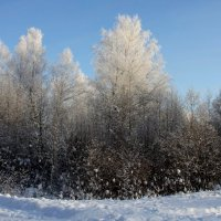 Зима... :: Nikolay Shumilov