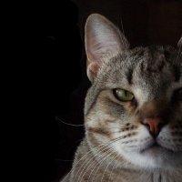Суровый котик Соня) :: Дмитрий