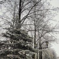 Зимняя аллея! :: Борис Кононов
