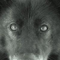 Эти глаза... :: Николай Масляев