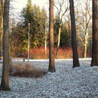 В зимним парке. :: Валентина Жукова