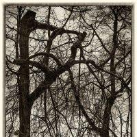 Графика ветвей :: Игорь Герман