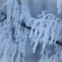 Зима.Потаповка. :: Николай Картаев