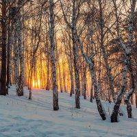 Завершение зимнего дня :: Анатолий Иргл