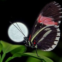 Луна и бабочка :: Alexander Andronik