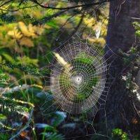 Звезда паука :: Сергей Чиняев
