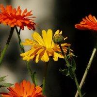 Цветочное соцветие :: Владимир Гилясев