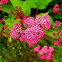 цветы :: Алла Лямкина