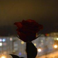 Роза в темную ночь! :: Михаил Поскотинов
