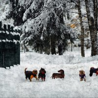зимний пейзаж с собачками :: sv.kaschuk