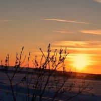 Ещё зима, но солнышко уже греет по весеннему..... :: Ирина Жеребятьева