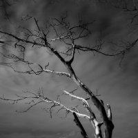 Над простором уснувшей реки :: Ян Кемпи