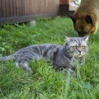 Кошачья паранойя :: Константин Огнев