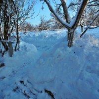 Экскурсия в Гадюкино зимой (31) :: Александр Резуненко