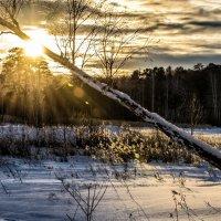 sunset in winter :: Dmitry Ozersky