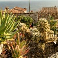 Кактусы,Средиземноморский сад, Оз :: Witalij Loewin