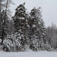 Черно-белая зима :: Татьяна Соловьева