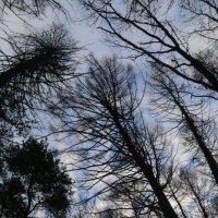 Утренние небо :: Василий Прощенский