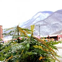 Зима+весна :: boris kantor